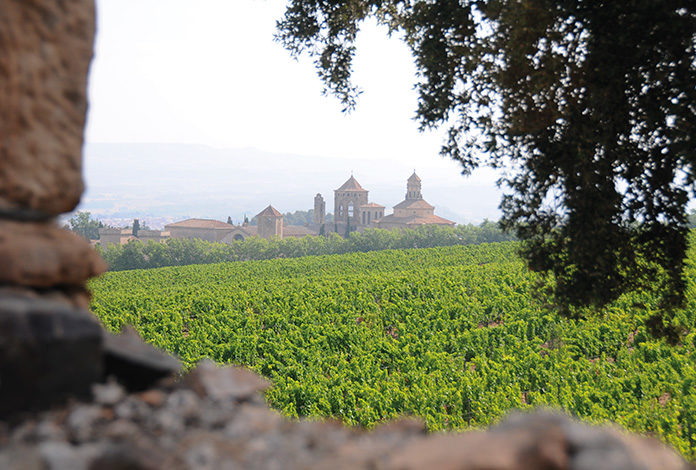 vinos-catalunya